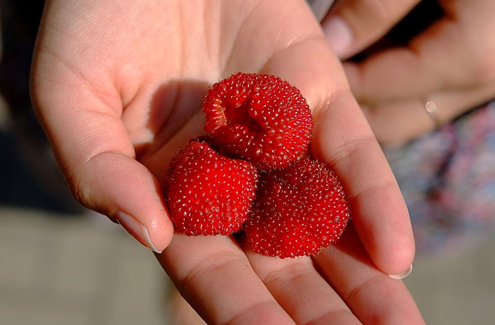 Geliebte Erdbeeren? Himbeeren? Erdbeer-Himbeeren! | myfavoritemarmalade @FS_98