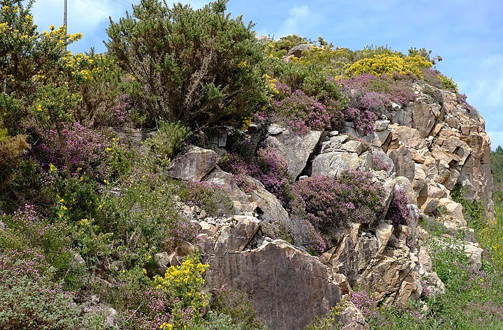 Was uns in Galicien sofort auffiel, war die unglaubliche Natur! Alles ist Grün und blüht!